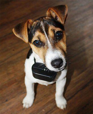 Billiger Preis Hundetrainer Kein Elektroschock Hundeerziehung Tierfreundlich Ferntrainer Top Warm Und Winddicht