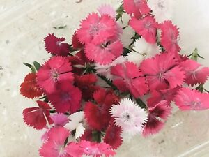 Edible-dianthus-flowers-Castle-Hill-Hills-District-Contactless-Pick-Up-Only