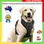 NEW-Rabbitgoo-Front-Range-Dog-Harness-No-Pull-Adjustable-Outdoor-Pet-Large-Size thumbnail 1