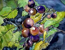 grape vine fruit still life watercolor painting art print grapes purple wine
