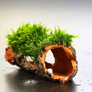 Flame-moss-Decaying-trunk-Aquarium-Ornament-decoration-plants-tank-low-co2