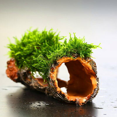 Flame moss Decaying trunk - Aquarium Ornament decoration plants tank low co2