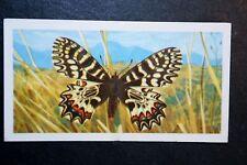 Small Thais    European Butterfly  Vintage Colour Card # VGC