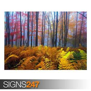 BEAUTIFUL-COLORED-TREES-AD968-NATURE-POSTER-Poster-Print-Art-A0-A1-A2-A3
