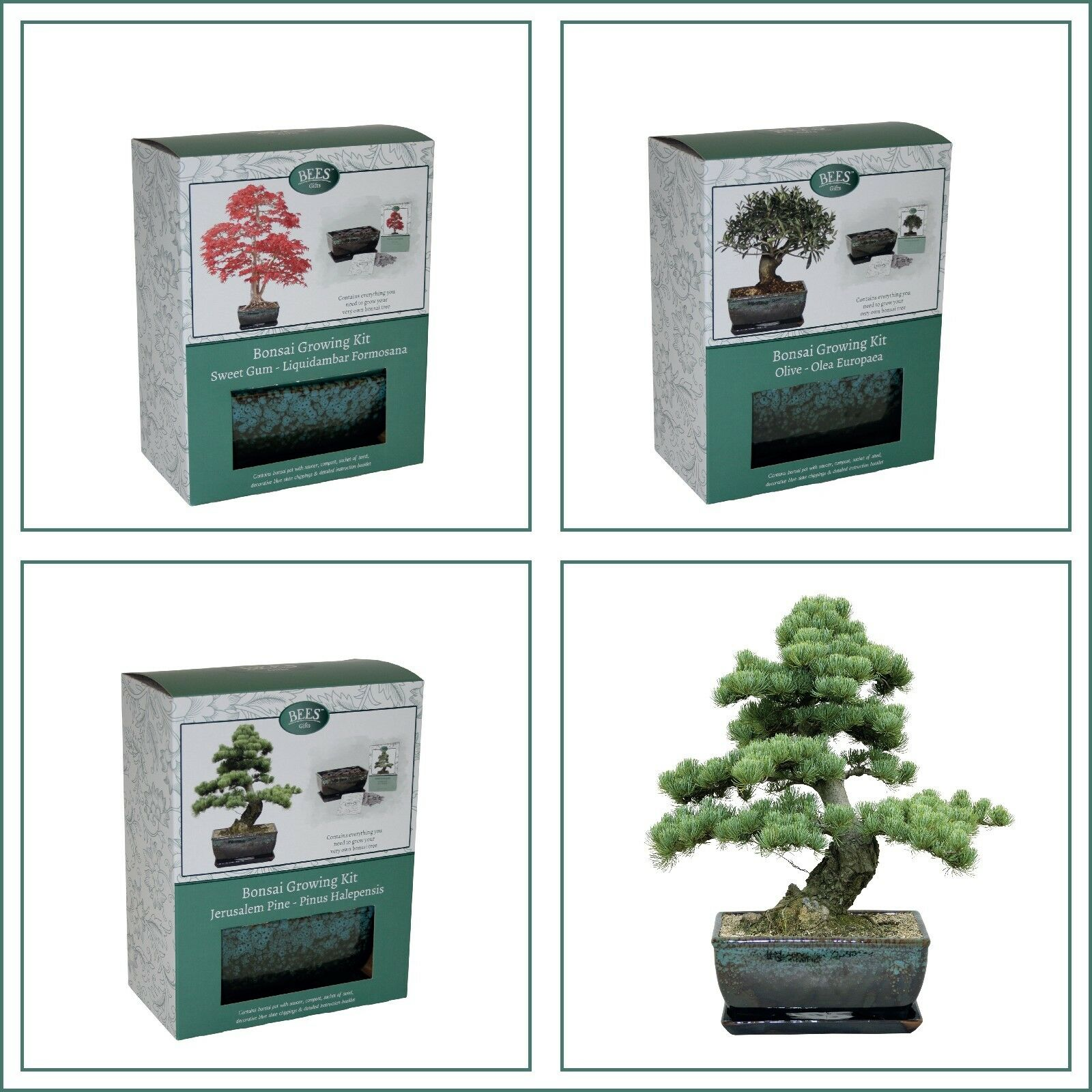 5 Bonsai Tree Kit to Grow Your Own From