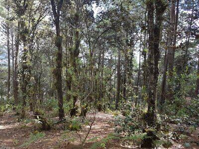 Terrenos en venta en Alcanfores