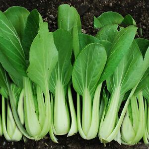 Asian grow seed veg