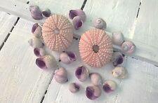 Assorted Mixed Seashells 2 Pink Sea Urchins & 20 Purple Lilac Periwinkle Shells