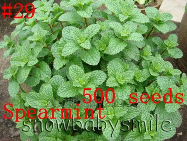 52 Variety Herb Seeds Garden Aromatic Spices Plant Vegetable Medicinal Heirloom