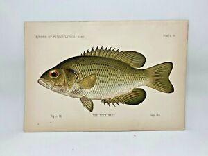 Scarce-First-Denton-Fish-Print-1889-Rock-Bass-Original