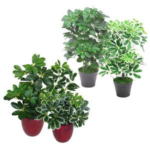 Leaf-Design-55cm-Realistische-Kuenstliche-Schefflera-Arboricola-Schirm-Baum