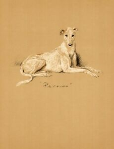 1940-Antique-Greyhound-Dog-Print-Lucy-Dawson-Greyhound-Illustration-3843v