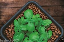 10 Liters GROW !T Clay Pebbles Growing Media Expanded Clay Rocks SAVE BAY HYDRO