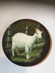 White-Goat-Welsh-slate-Round-Coaster-felt-backed-3-25-034-diameter