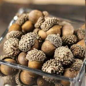 24 Fall Realistic Harvest Brown Acorns Table Crafts Wedding Decor Thanksgiving