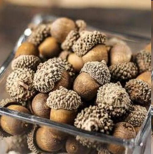 48 Fall Realistic Harvest Brown Acorns Table Crafts Wedding Decor Thanksgiving