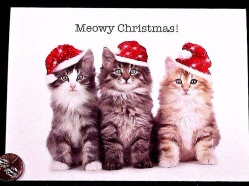 Christmas Kittens Cats Santa Hats Posing Meowy Christmas Greeting Card NEW