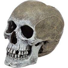 Blue Ribbon Exotic Life-Like Human Skull Aquarium Reptile Cave Ornament  EE-358