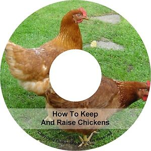 Keeping Rearing Raising Pet Chickens Care How To Build ...