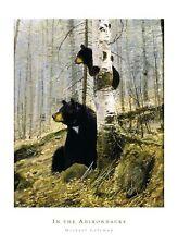 Michael Coleman In The Adirondacks print black bear wildlife hunting poster