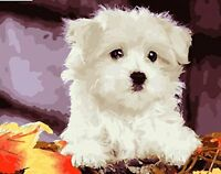 16x20'' White Puppy Acrylic Diy Paint By Number Kit Digital Oil Painting Spa612
