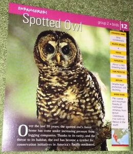 Endangered-Species-Animal-Card-Birds-Spotted-Owl