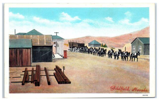 Early 1900s Mule Team, Goldfield, NV Postcard