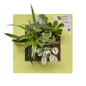 Détails sur Cadre végétal Vert Anis 30x30cm Garden and the City (tableau  végétalisé, déco)