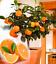 thumbnail 12 - Edible-Dwarf-Orange-Tree-20-PCS-Seeds-Garden-Fruit-Mandarin-Bonsai-Flores-Citrus