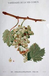 Grape-Wine-Vines-Winemaker-Grapes-Vino-Wine-Grape-Raisin-Grappolo-Andalusia
