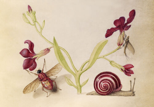 Circa 1592 Flemish Botanical Watercolor Snail Gilly Flower Canvas Print