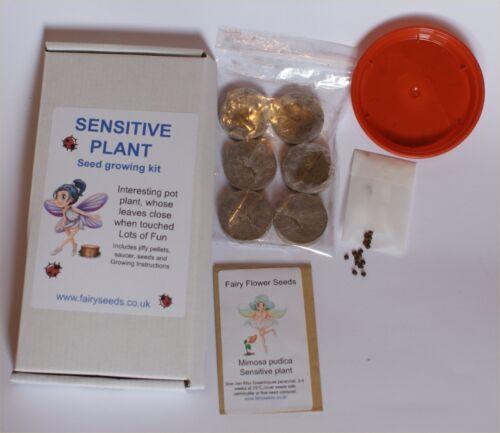 Children/'s Seed Starter Kit Sensitive Plant Fairy Garden Seeds Mimosa pudica