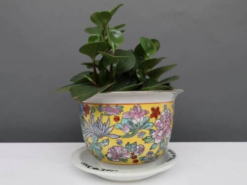 China Porzellan Blumentopf  Gelb mit bunten Blumen Ø 17cm #P-BLU-P26-1