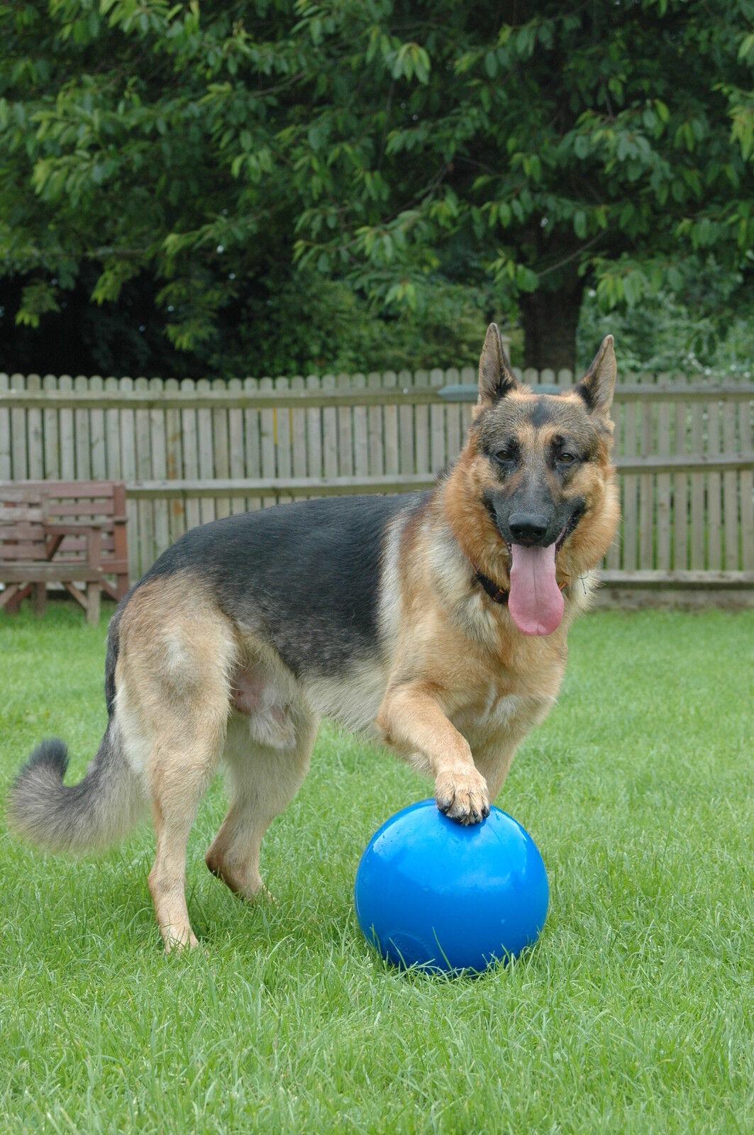 Company Company Company of Animals Boomer Ball, Hundespielzeug 20.3cm (20cm) blau Farbe  | Neuheit Spielzeug  2e151a