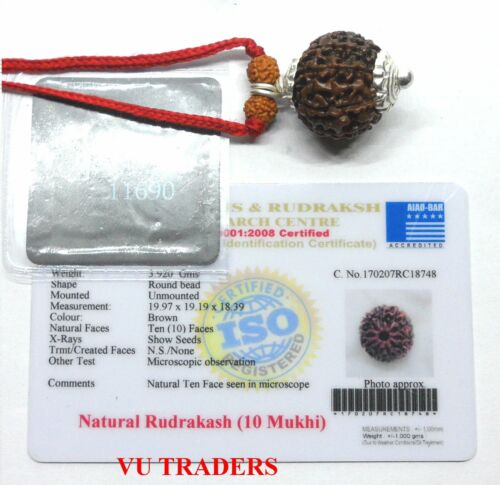 10 MUKHI RUDRAKSHA TEN FACE RUDRAKSH JAVA BEAD LAB CERTIFIED SIZE 19.97 MM