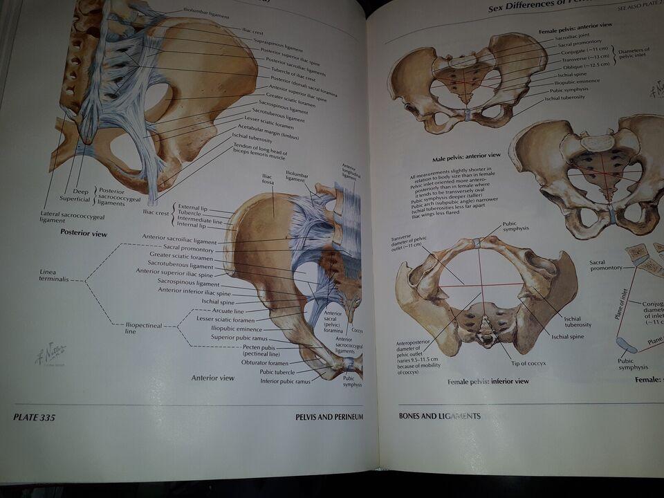 Atlas of Human Anatomy, Frank H. Netter, emne: