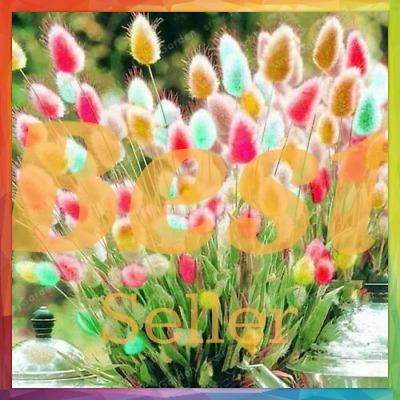 100PCS LAGURUS OVATUS BUNNY TAIL GRASS GARDEN ORNAMENTAL BONSAI SEEDS PLANT SEED