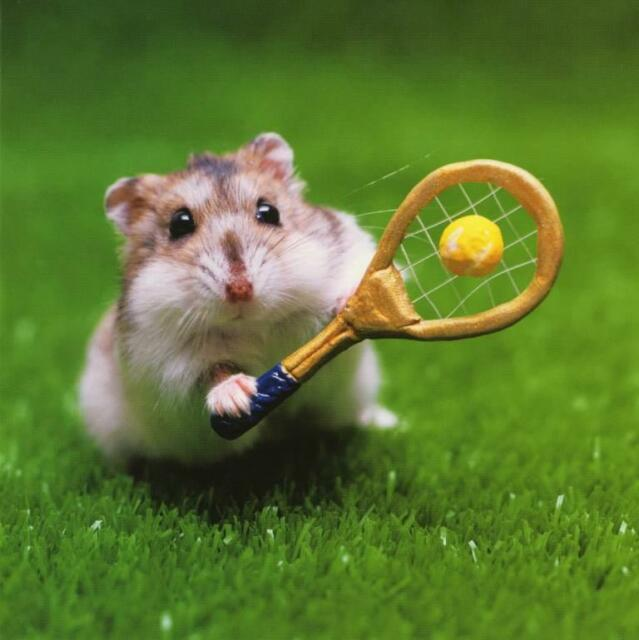 Hamster playing tennis blank greeting cards any occasions best hamster playing tennis blank photo greeting card birthday greeting cards m4hsunfo