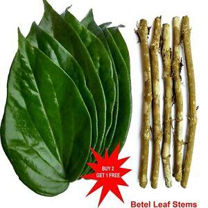 Details about Betel leaves Plant / Betel Leaf Plant / Pan Plant / Piper  betle / 4 Live Stems