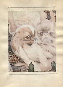 E J Detmold Vintage Print The Pekinese Spaniel -The Book of Baby Dogs 1929