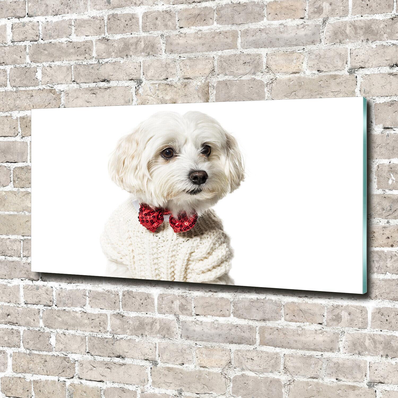Acrylglas-Bild Wandbilder Druck 140x70 Deko Tiere Malteser mit Fliege