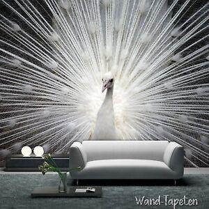 VLIES-FOTOTAPETEN-WANDTAPETEN-WANDBILDER-WEISSE-PFAU-MODERN-KN-1705