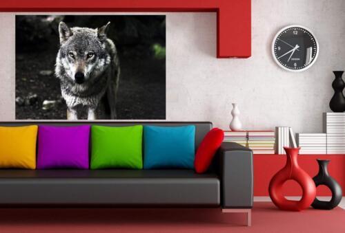 Weißer Wolf Wald Leinwandbild AK Art Studio Wanddeko Wandbild Kunstdruck XXL