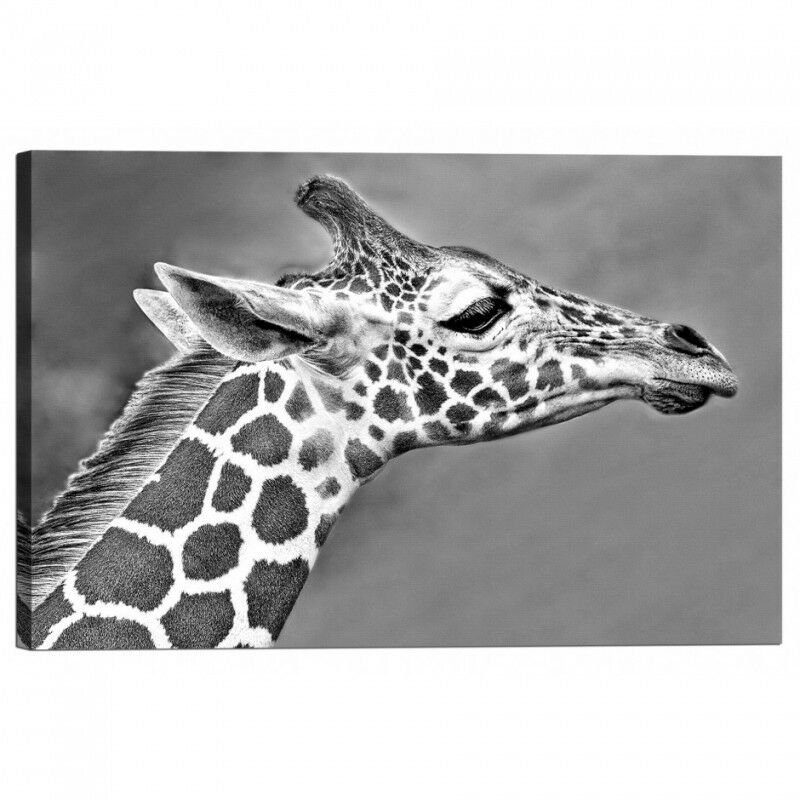 Quadro Stampa su Tela con Telaio Giraffa Giraffa Giraffa | D'être Très Apprécié Et Loué Par Les Consommateurs  | Valeur Formidable  | Matière Choisie  013595