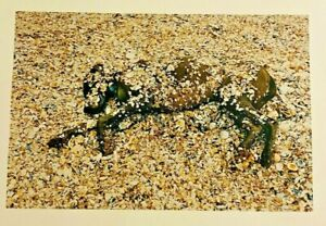 "Large William Wegman ""Under Shells"" Art Photograph Picture 16 x 20"