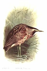 BIRDS-of-the-BRITISH-ISLES-CD-27-Old-Rare-Antiquarian-Bird-Books-Collection