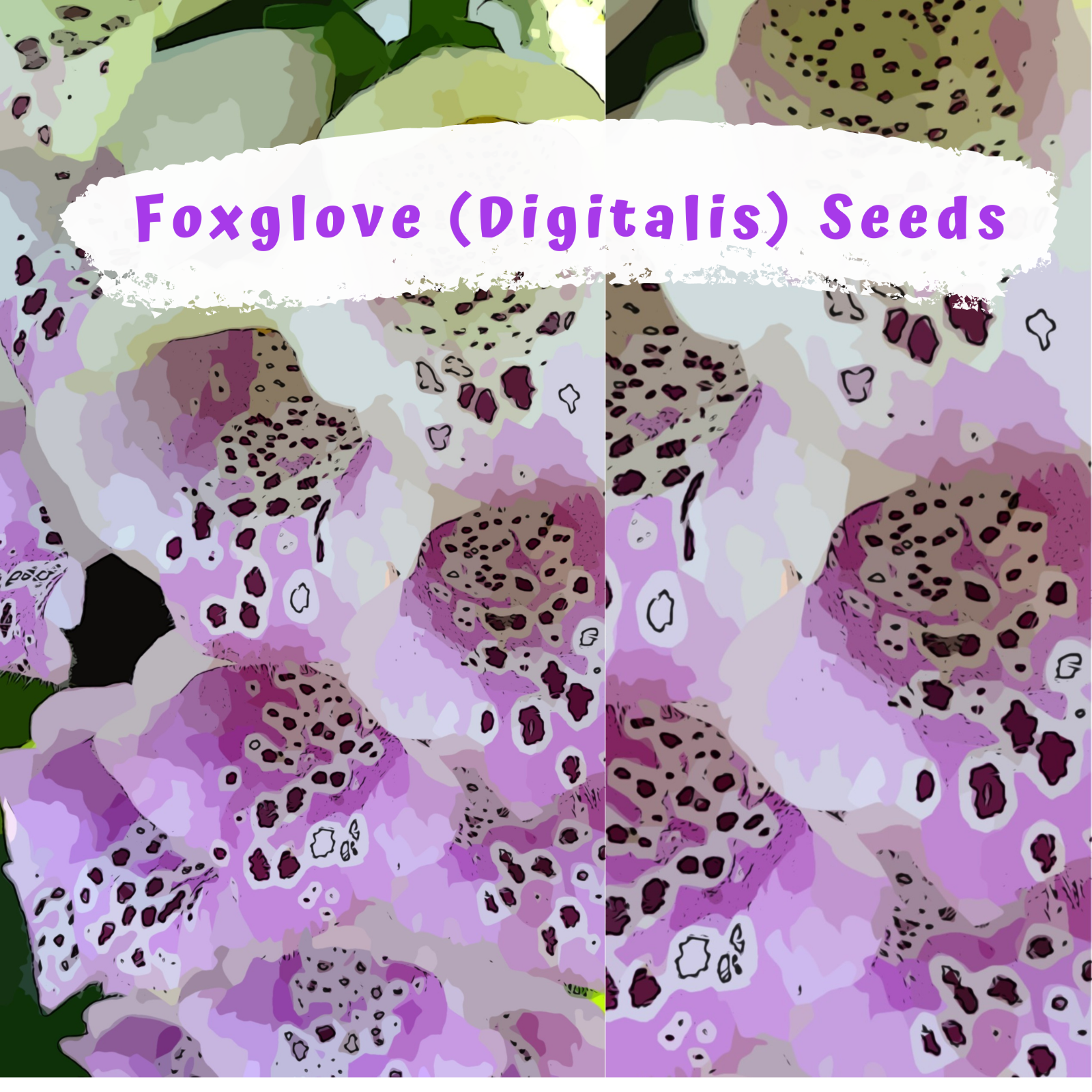 Fantastic Foxglove Mix (digitalis) 500 plus Flower Seeds
