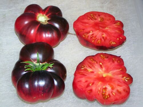 Vegetable Tomato INDIGO BLUE BEAUTYHeirloom Organic Seeds
