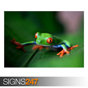 RED-EYED-TREE-FROG-MACRO-AE913-Photo-Picture-Poster-Print-Art-A0-A1-A2-A3-A4