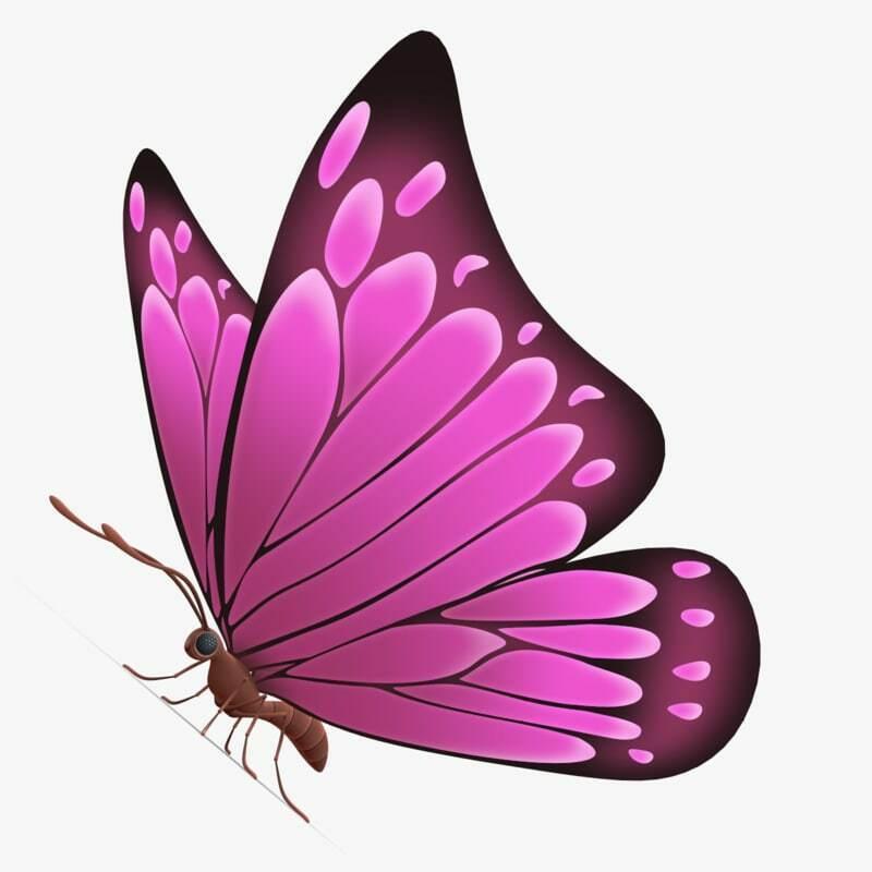butterflybeauty2012